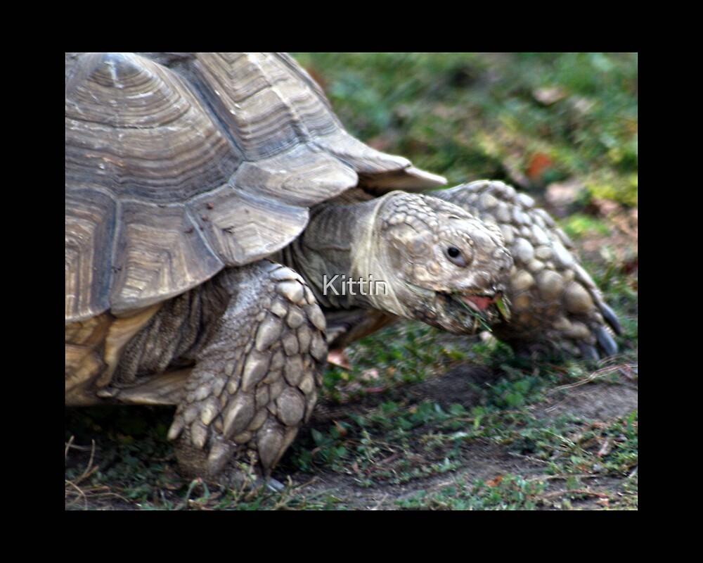 turtle 03 by Kittin