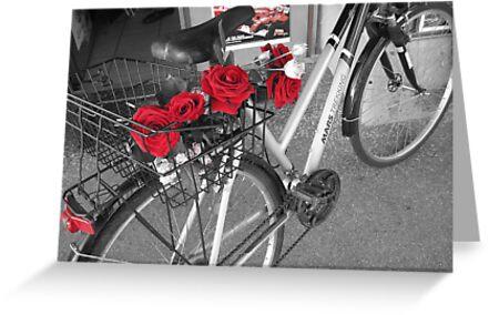 Red Rose by gotmiller