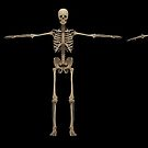 3D rendering of human skeletal system at different angles. by StocktrekImages
