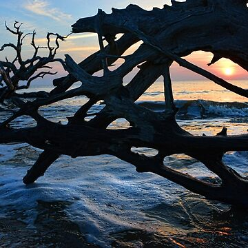 Window at Driftwood Beach by berisme