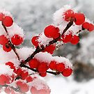 Winter Berries by OftheStar