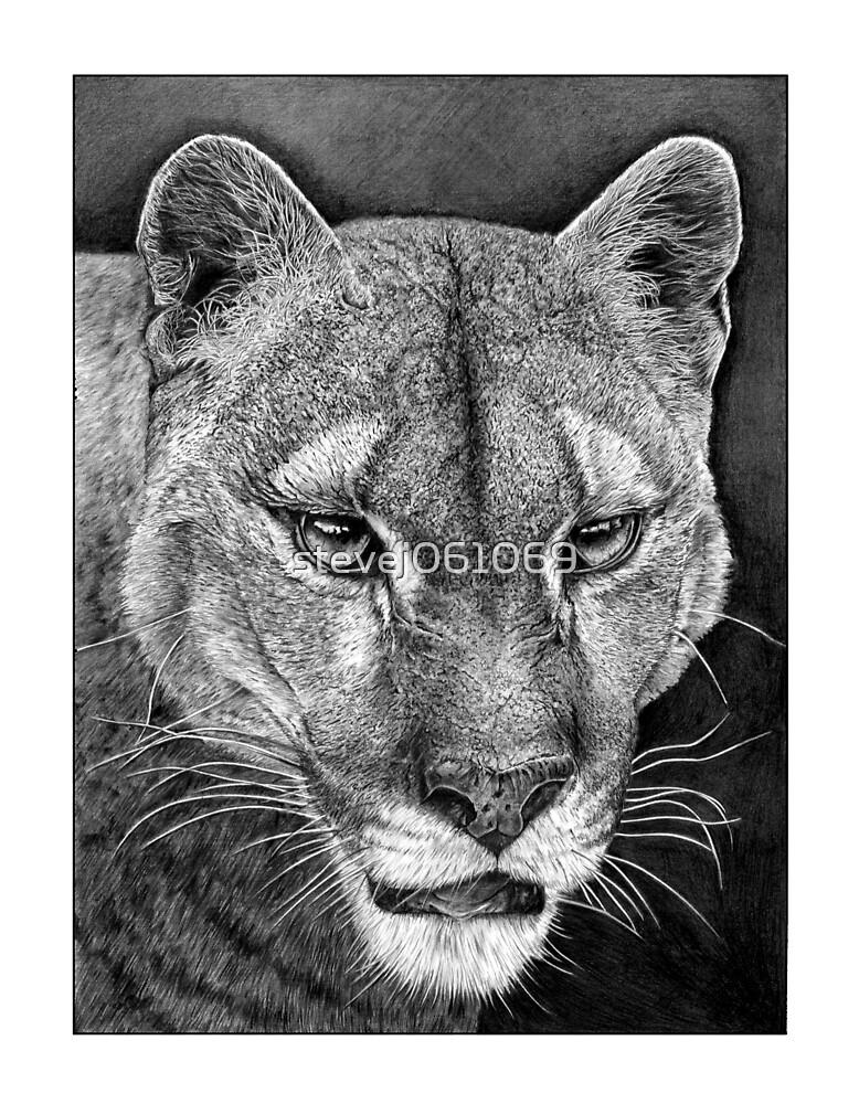 Cougar by stevej061069
