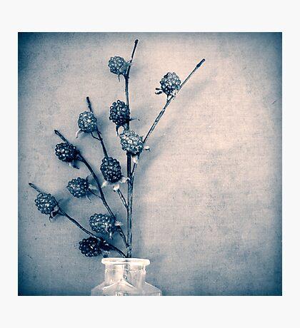 Sweet Blue Photographic Print