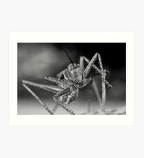 Chrome Plated Insectivore Art Print