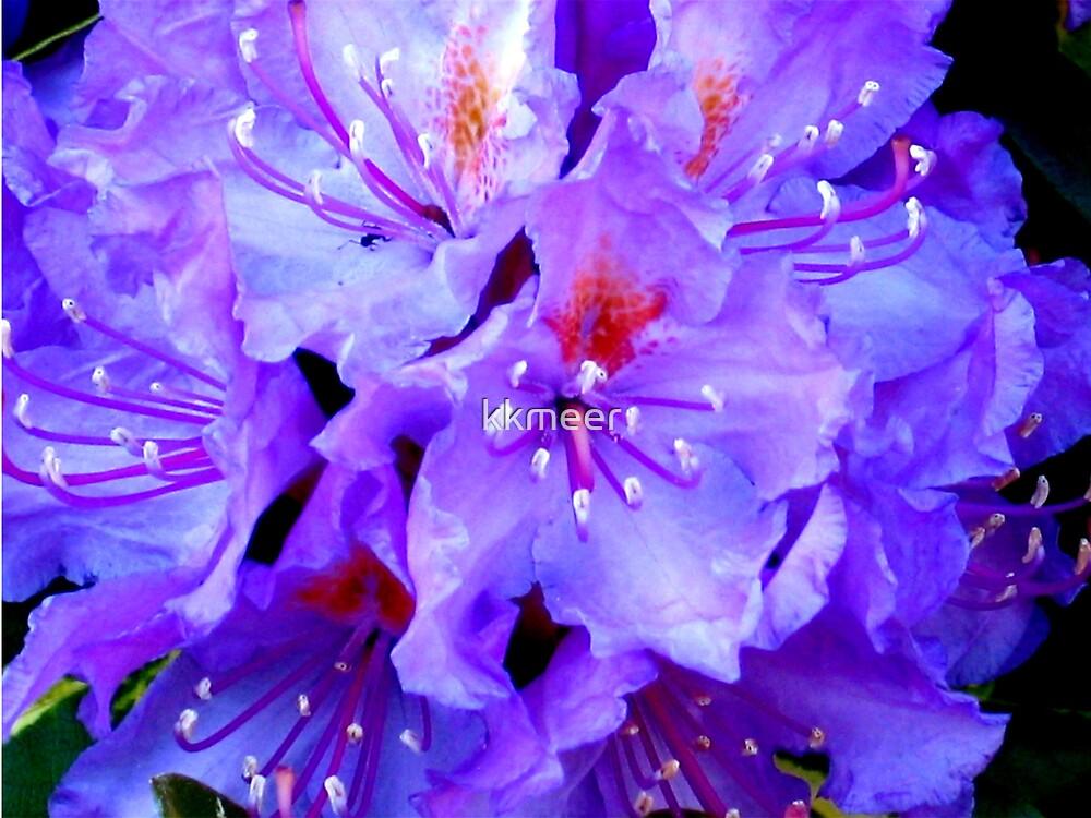Bunch of purple by kkmeer