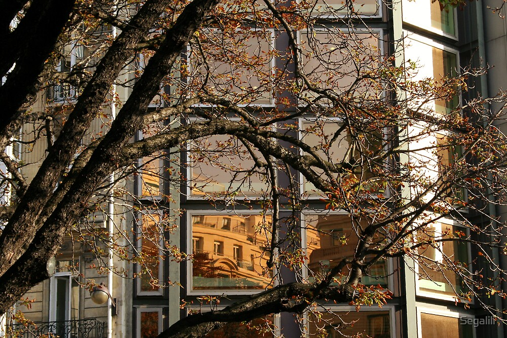 Golden Reflection by Segalili