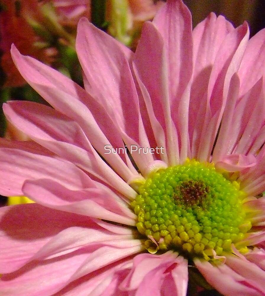 Pretty In Pink by Suni Pruett