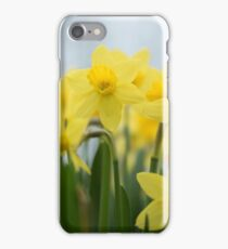 Daffs in Spring iPhone Case/Skin