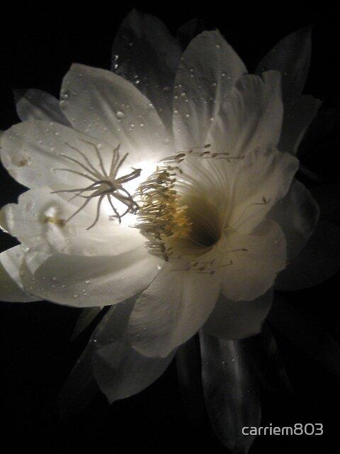 Midnight Bloomer by carriem803