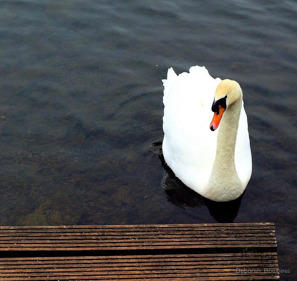 Swanning up to the Jetty by Deborah  Bowness