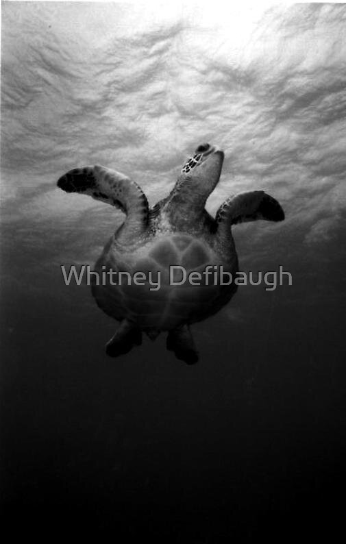 out of the deep by Whitney Defibaugh