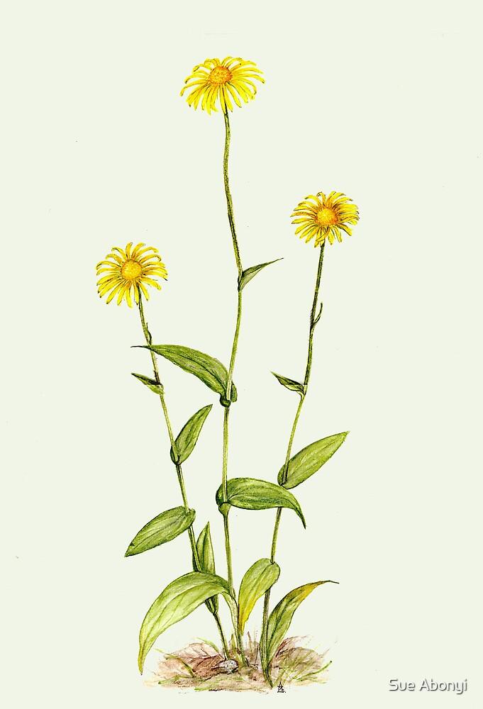 Wild Sunflower - Doronicum hungaricum by Sue Abonyi