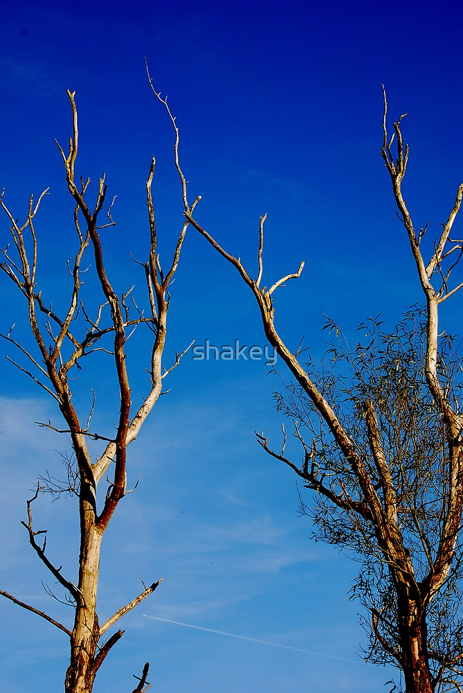 Stark by shakey