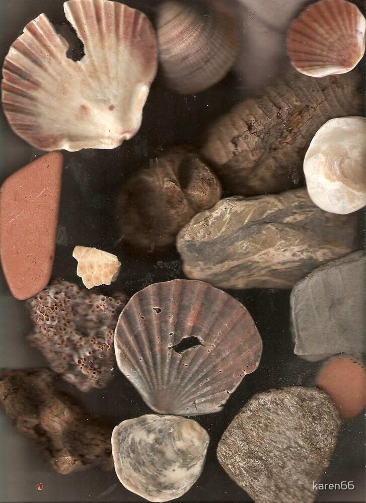 Spanish Shells by karen66
