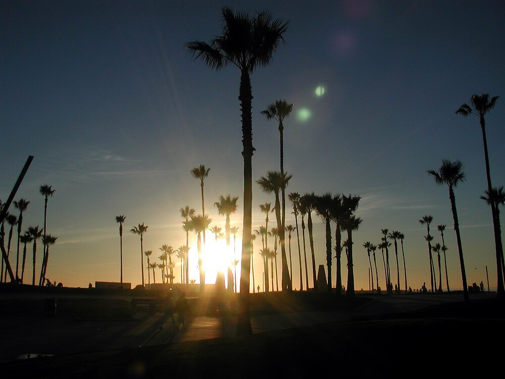 Venice Beach Palms by LizzyM