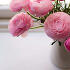 Pink ranunculus by Natalie Board