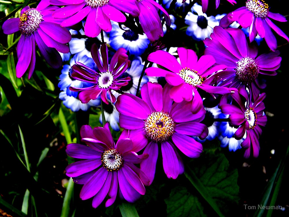 A Cluster of Flowers by Tom Newman