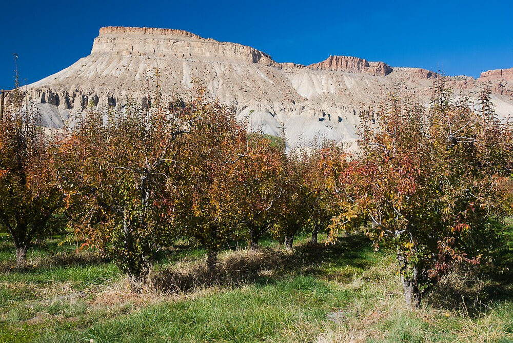 Peach orchard and Mt. Garfield in Autumn by Linda J Armstrong