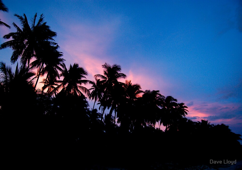 Palm Sunset by Dave Lloyd