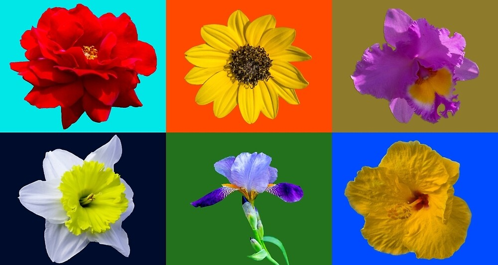 Combo Flowers6 by Keith Childers