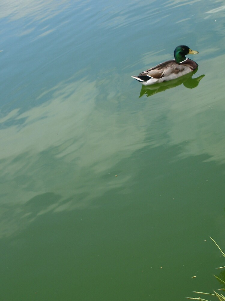 Single Duck by Natania Rogers