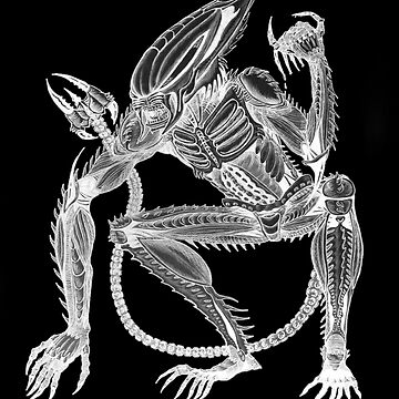 Alien - Bioluminescent Xenoscorpial version by Thoughtmasons