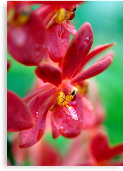 Red Orchids by Dave Lloyd