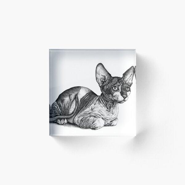 El gato real Bloque acrílico