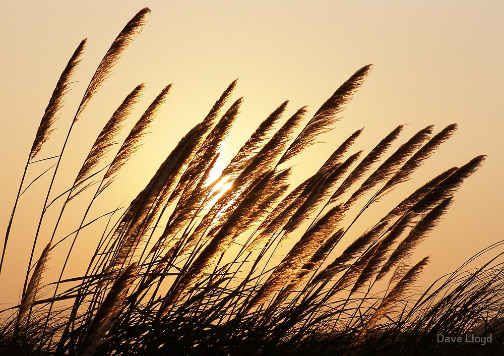 Pampas Sunset by Dave Lloyd