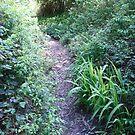 Forest path by plaidfluff
