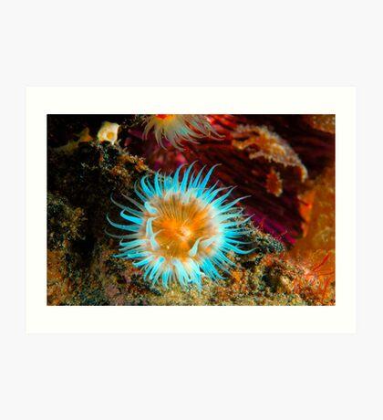 Vibrant Anemone Art Print