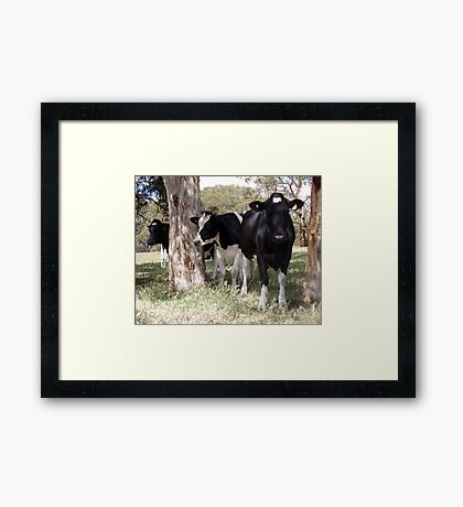 Mooooo Three Framed Print
