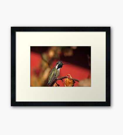 Perched Hummingbird Framed Print