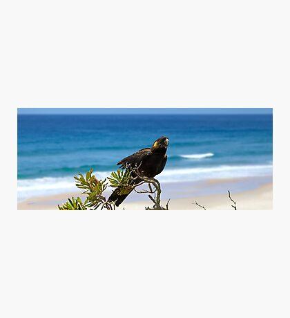 Sunshine Beach Cockatoo Photographic Print