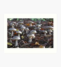Toadstool army Art Print