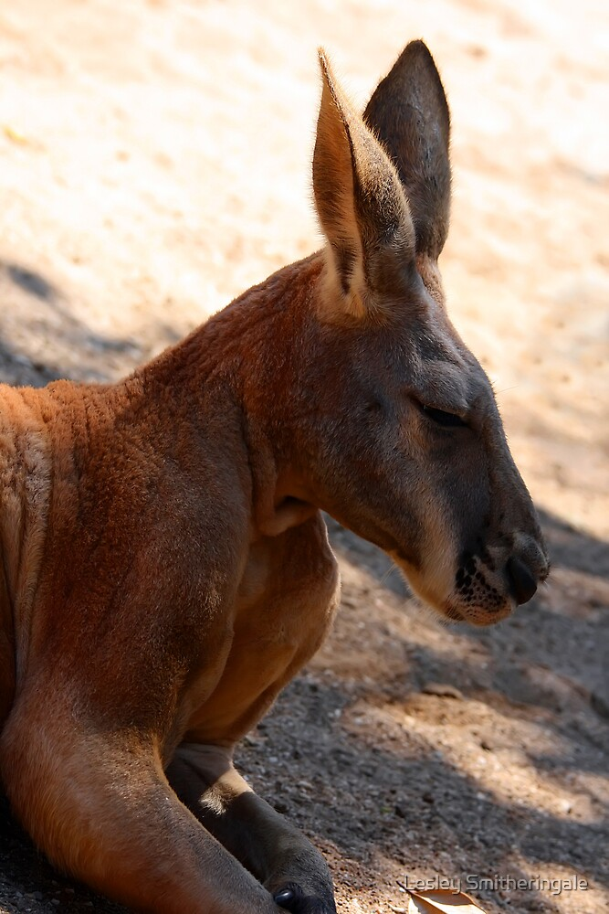 Red Kangaroo by Lesley Smitheringale
