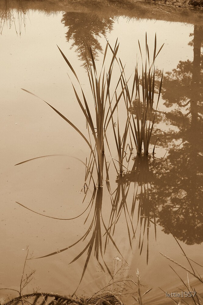 Reflection of grasses by lettie1957