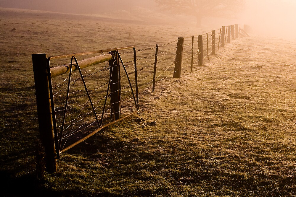 Morning Fence 2 by Matthew James