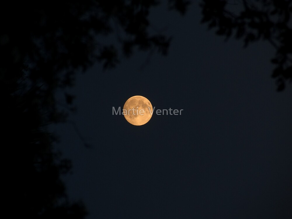Golden Moon by Martie Venter