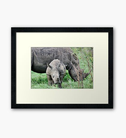UP CLOSE WITH RHINO BABY AND MOTHER - White Rhinoceros - Ceratotherium sumum  Framed Print