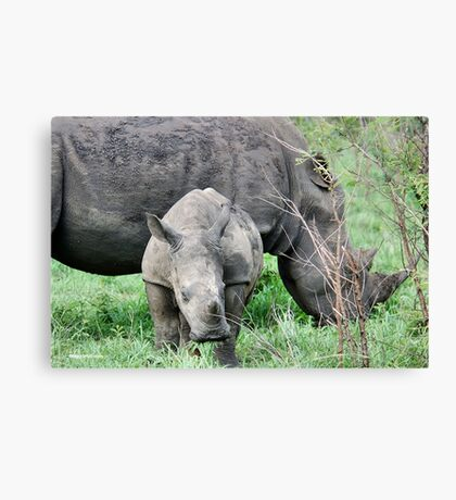 UP CLOSE WITH RHINO BABY AND MOTHER - White Rhinoceros - Ceratotherium sumum  Canvas Print