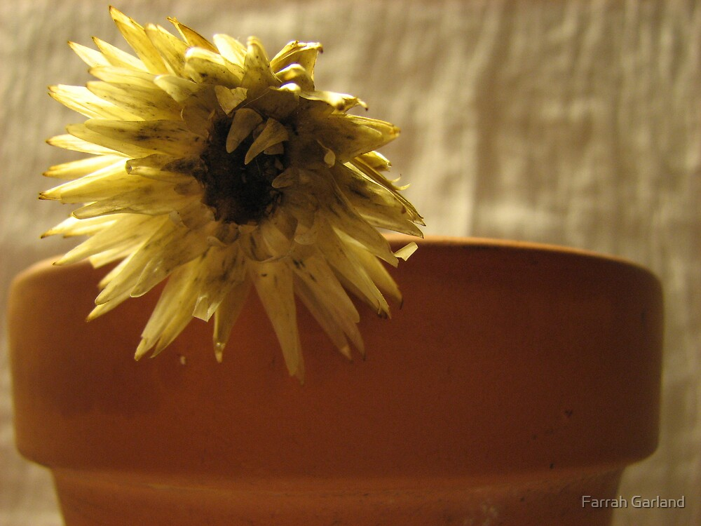 Pots with flower 2 by Farrah Garland