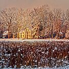 Snow Covered Farm Field by Debra Fedchin