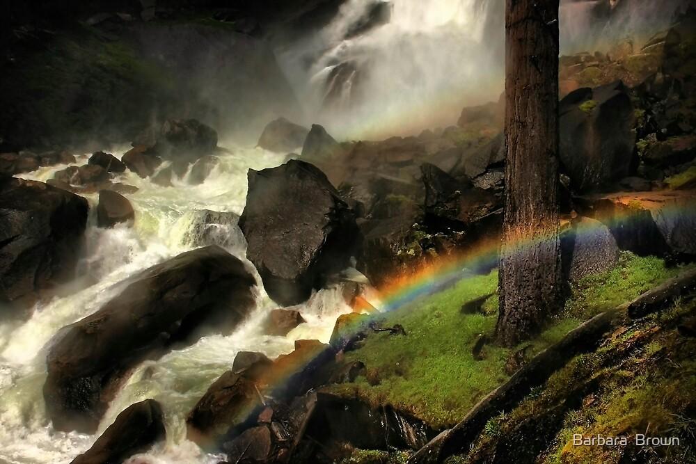 Mist Trail by Barbara  Brown