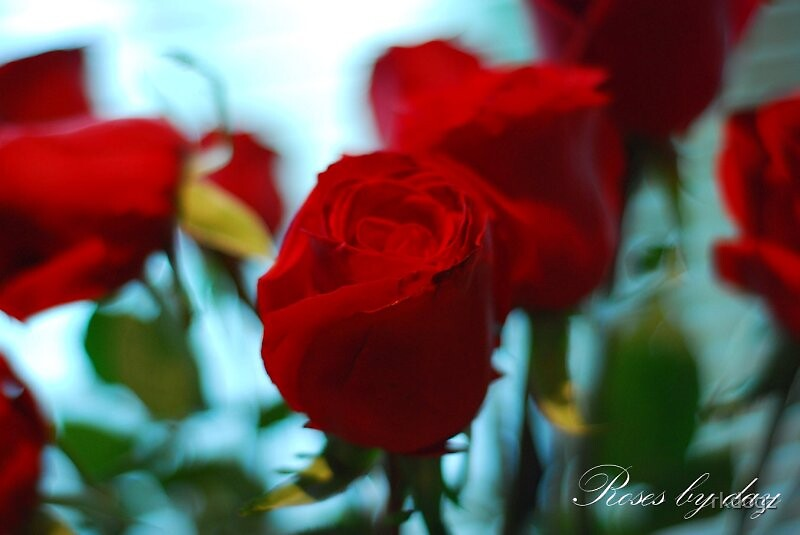 Red roses by rkdogz