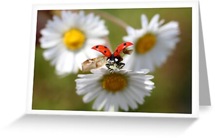 Ladybug almost flying away. by Ellen van Deelen