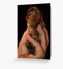 Very Miniature Dachsund Greeting Card