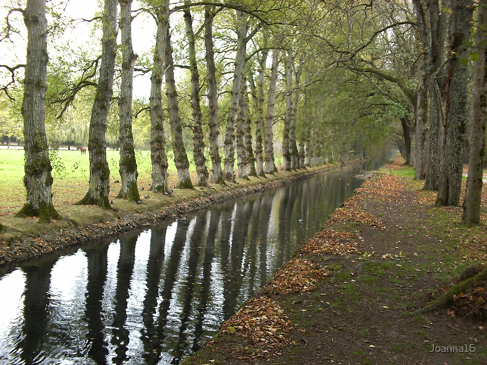 Autumn Reflection by Joanna Jeffrees