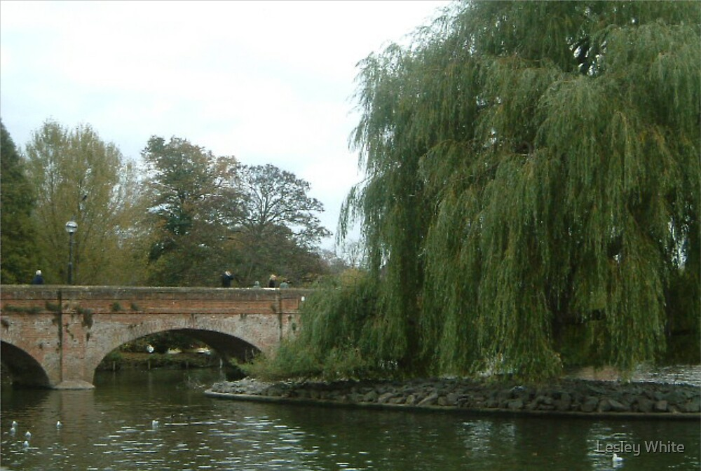 Bridge on the Avon by Lesley White