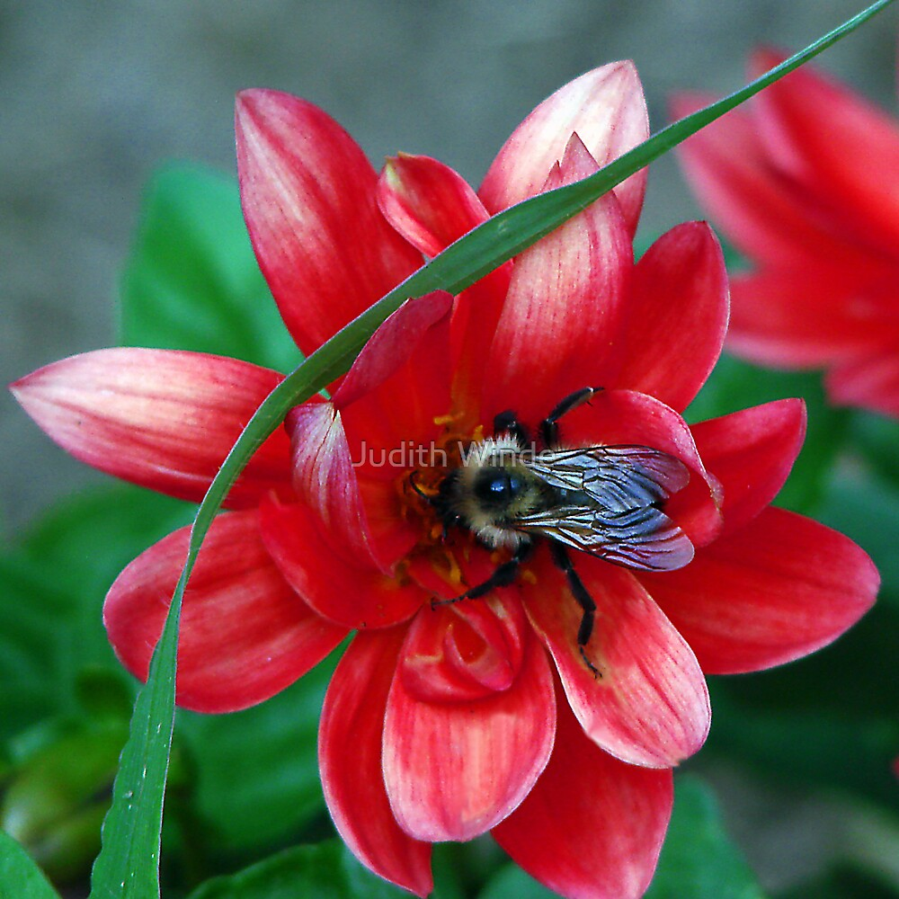 In Search of Nectar by Judith Winde